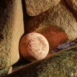 La boule dans un écrin de Granit Rose, Trégastel, HDR (5266-68)