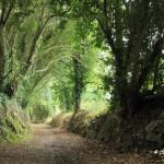 Le chemin de l'école Golgon, Trégastel