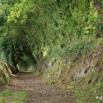 Le chemin de l'école Golgon, Trégastel (7174)
