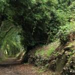 Le chemin de l'école Golgon, Trégastel (7182)